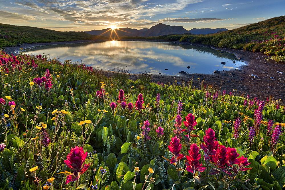 Sunrise over Alpine wildflowers, San Juan National Forest, Colorado, USA