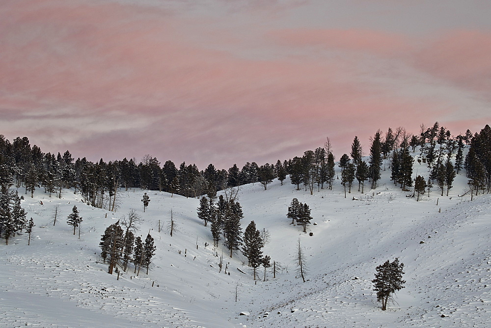 Pink clouds at dawn in the winter, Yellowstone National Park, UNESCO World Heritage Site, Wyoming, United States of America, North America