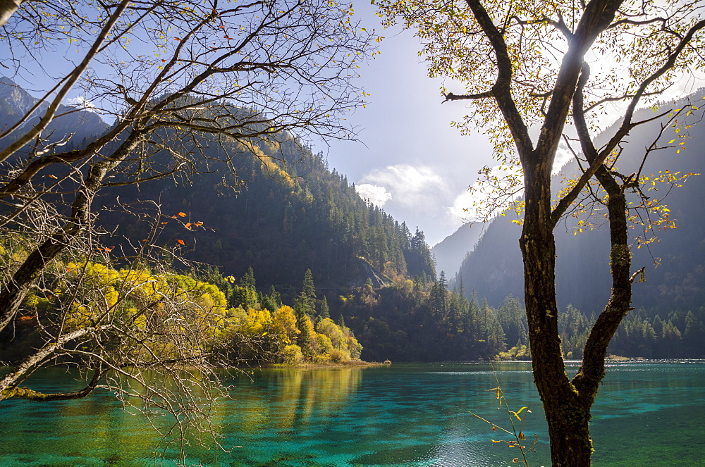 Five Flower Lake, Jiuzhaigou (Nine Village Valley), UNESCO World Heritage Site, Sichuan province, China, Asia - 767-1215