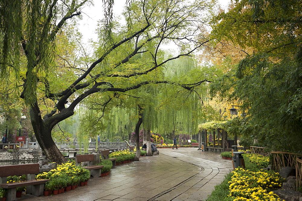 Baotu Spring Park, Jinan, Shandong province, China, Asia - 767-1259