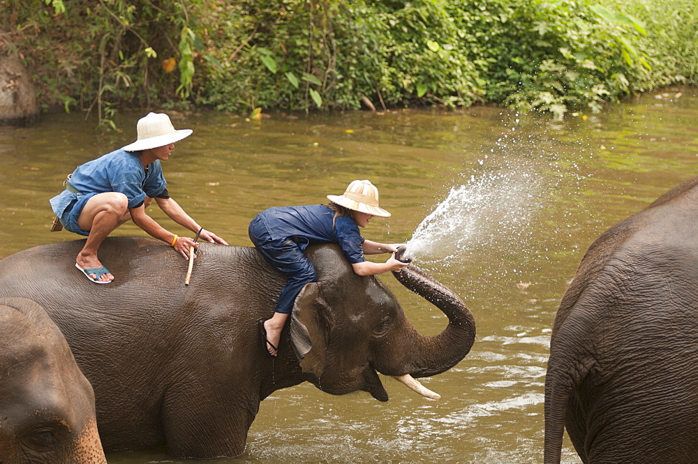 Elephant Conservation Center, Lampang, Thailand, Southeast Asia, Asia