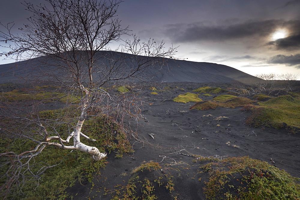 Desolate black ash landscape at the foot of Hverfjall (Hverfell) volcano, Myvatn, northern Iceland, Iceland, Polar Regions