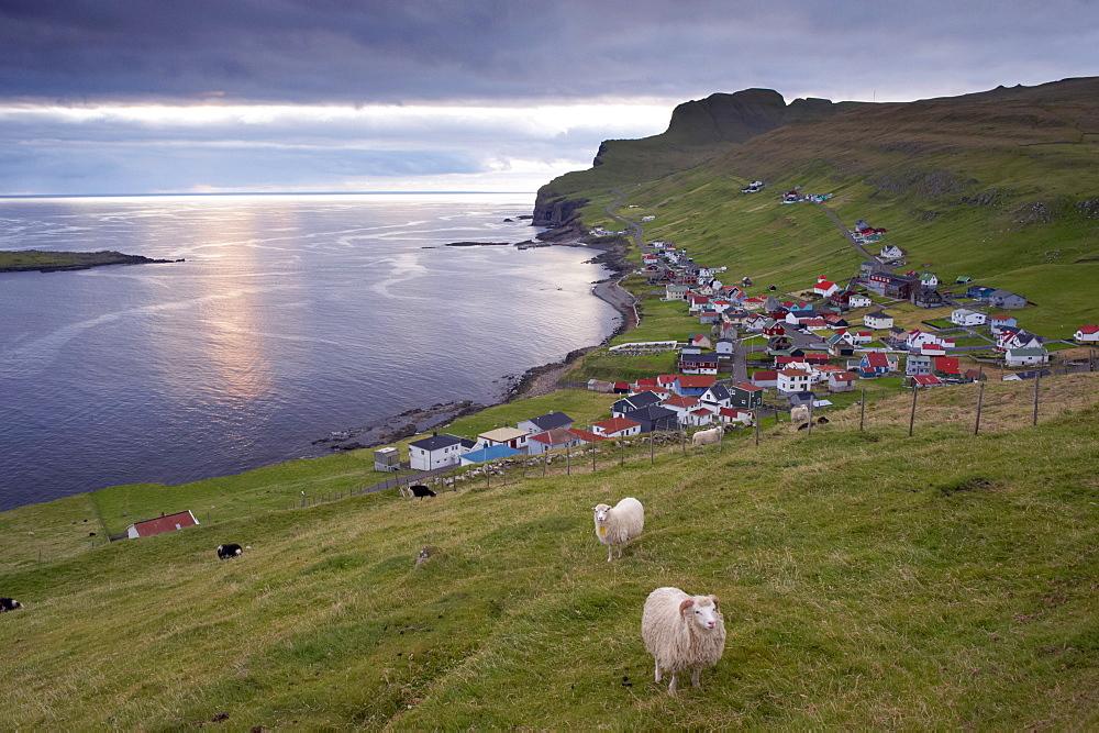 Sumba, picturesque village on south-west tip of Suduroy Island, and sheep, Suduroy Island, Faroe Islands (Faroes), Denmark, Europe