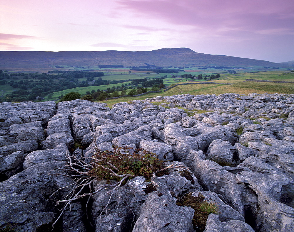 Limestone pavements near Chapel-le-Dale, Yorkshire Dales, National Park, Yorkshire, England, United Kingdom, Europe
