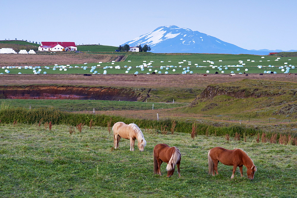 Agricultural land at the foot of the mighty volcano Hekla, north of Hella, in the south of Iceland (Sudurland), Iceland, Polar Regions - 770-1653