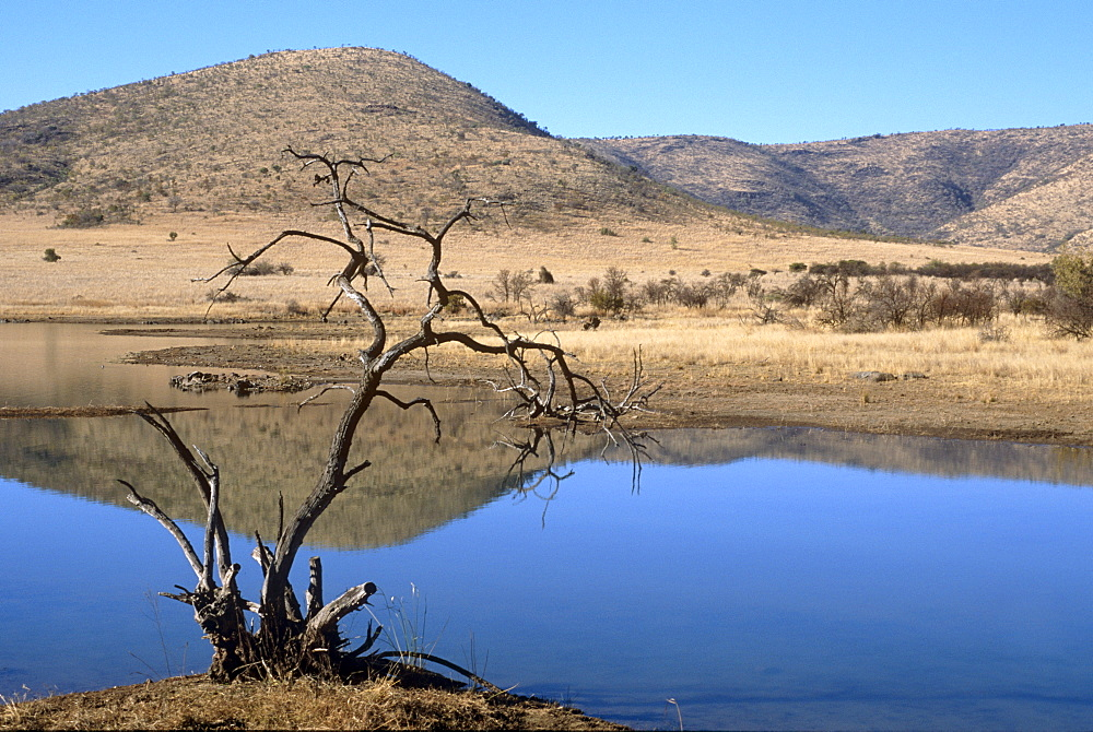 Mankwe Dam, central lake in the Pilanesberg National Park, North West Province, South Africa, Africa - 770-1710