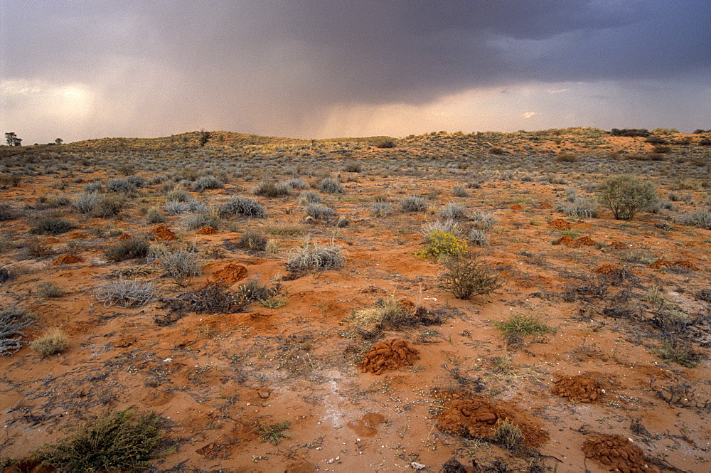 Rain clouds over Kalahari Desert in August, Kalahari-Gemsbok National Park, part of Kgalagadi Transfrontier Park, South Africa, Africa - 770-1713