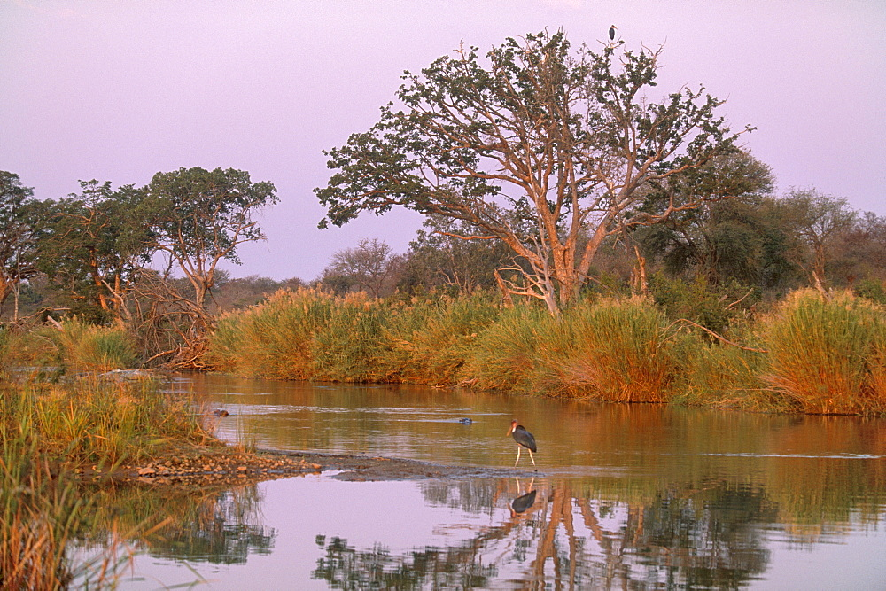 Olifants River, Kruger National Park, South Africa, Africa - 770-1714