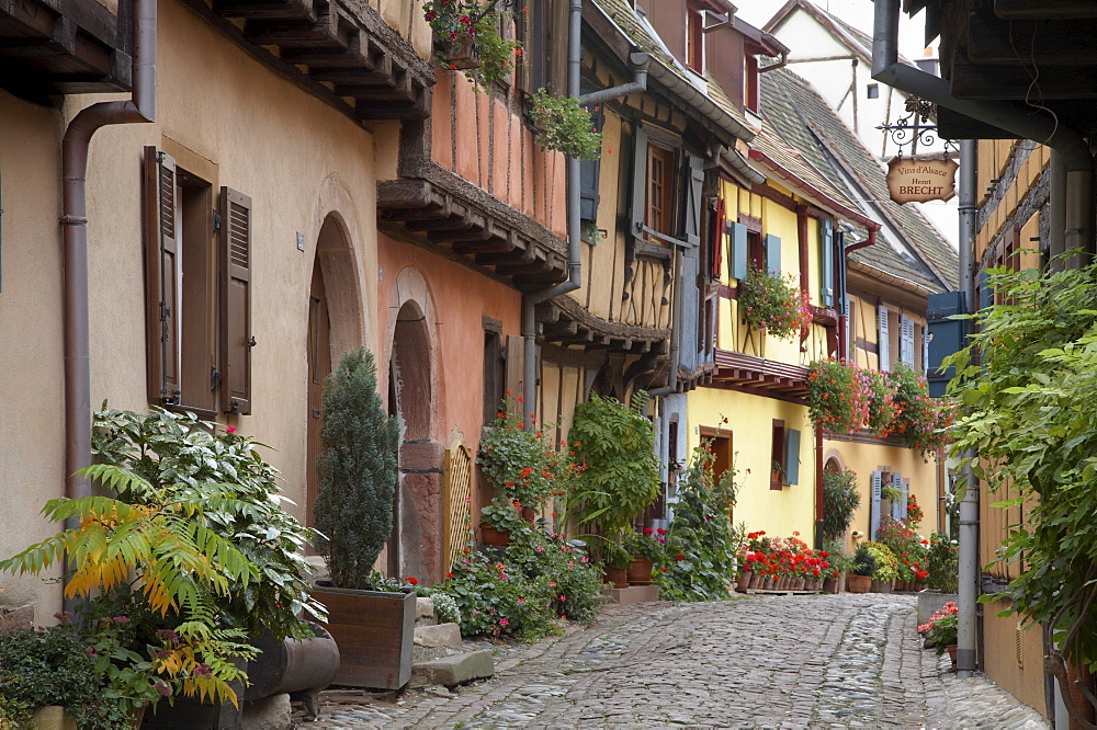 A street with traditional half-timbered houses in the charming village of  Eguisheim, Alsatian Wine Road, Haut Rhin, Alsace, France, Europe - 770-1744