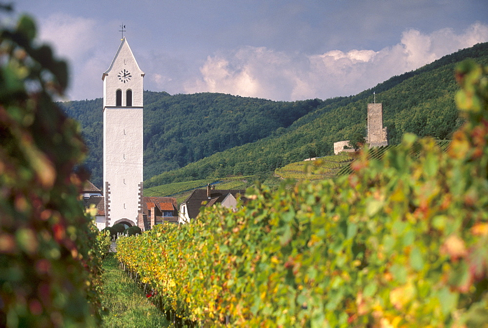 Katzenthal white church from the vineyards, Wineck castle in background, Katzenthal, village of the Alsatian Wine Road, Haut Rhin, Alsace, France, Europe - 770-1746