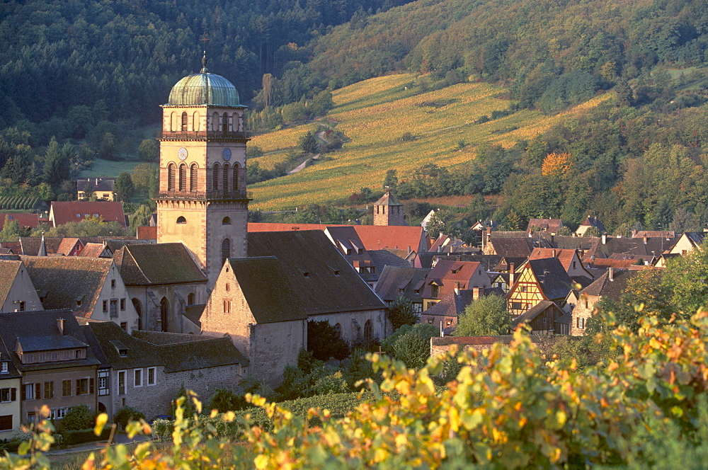 Kaysersberg church and rooftops from the vineyards, Kaysersberg, village of the Alsatian Wine Road, Haut Rhin, Alsace, France, Europe - 770-1748