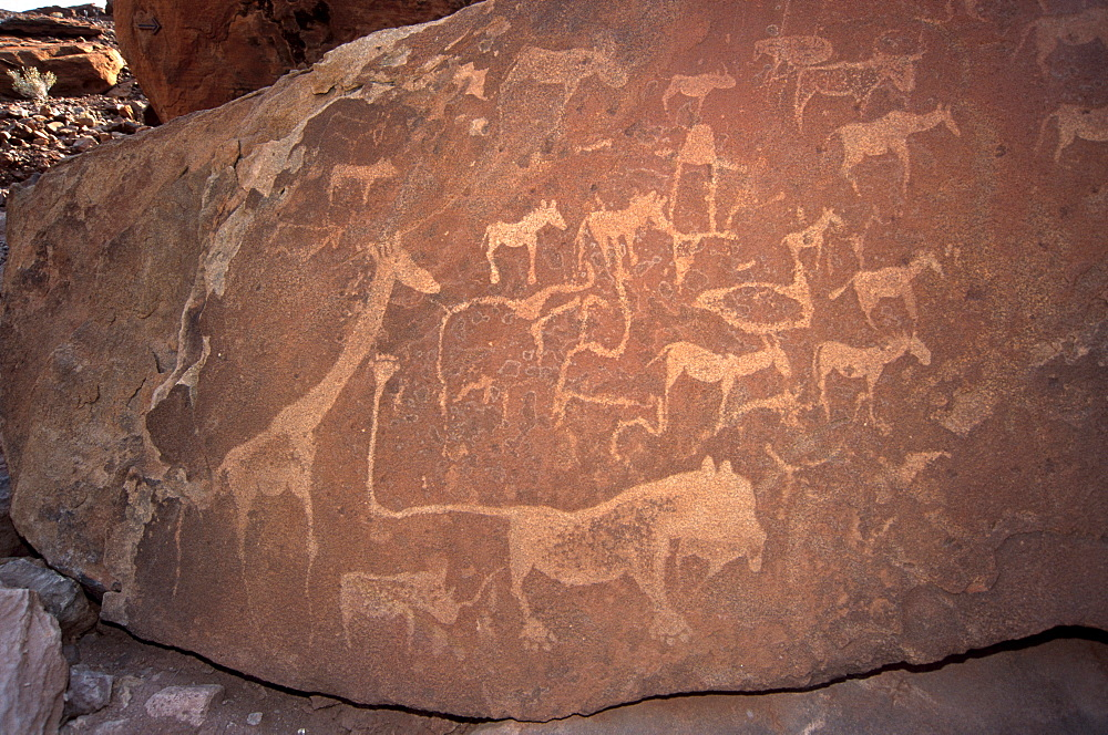 Twyfelfontein rock engravings (petroglyphs) dating from the late Stone Age, between 6000 and 2000 years, UNESCO World Heritage Site, Kunene region, Namibia, Africa - 770-1765