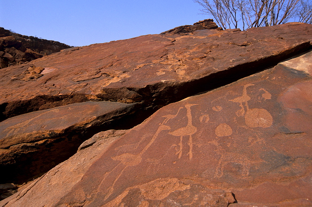 Twyfelfontein rock engravings (petroglyphs) dating from the late Stone Age, between 6000 and 2000 years, UNESCO World Heritage Site, Kunene region, Namibia, Africa - 770-1766