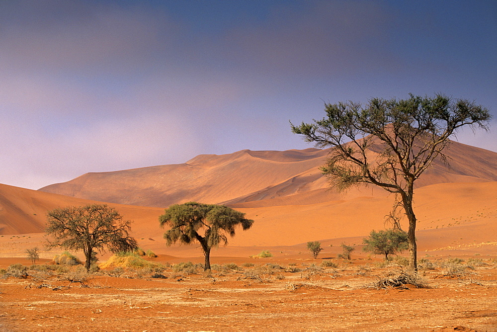 Red sand dunes rising up to 300m, Sossusvlei valley in Namib-Naukluft Park, Namibia, Africa - 770-1767