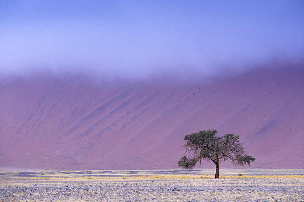 Early morning mist on red sand dunes which are up to 300m high, Sossusvlei valley, Namib-Naukluft Park, Namibia, Africa - 770-1769