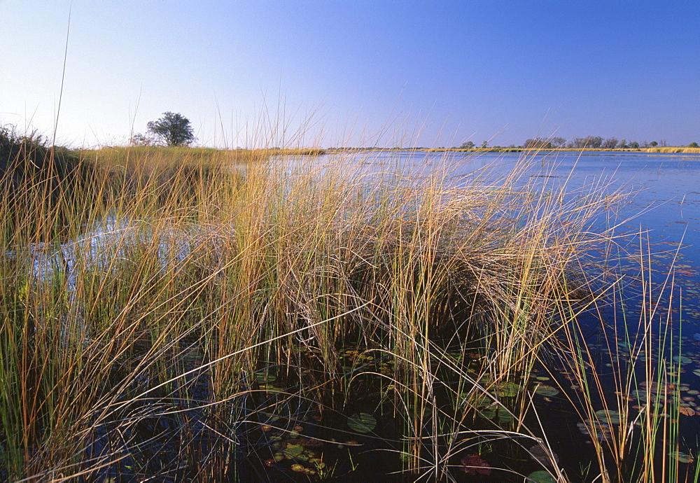 Lush vegetation in Okavango Delta, Moremi Game Reserve, Okavango Delta, Botswana, Africa - 770-1776