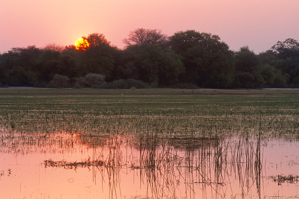 Sunset, Okavango Delta, Botswana, Africa - 770-1782