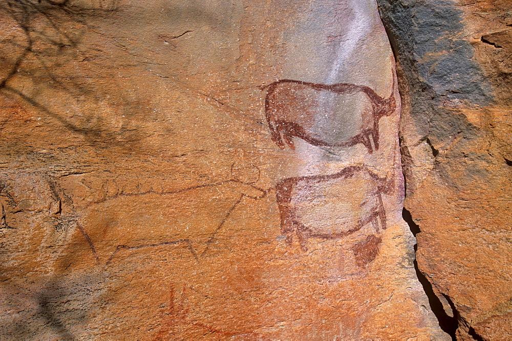 Rock art, rhinos, Tsodilo Hills, UNESCO World Heritage Site, Ngamiland, Botswana, Africa. - 770-1789