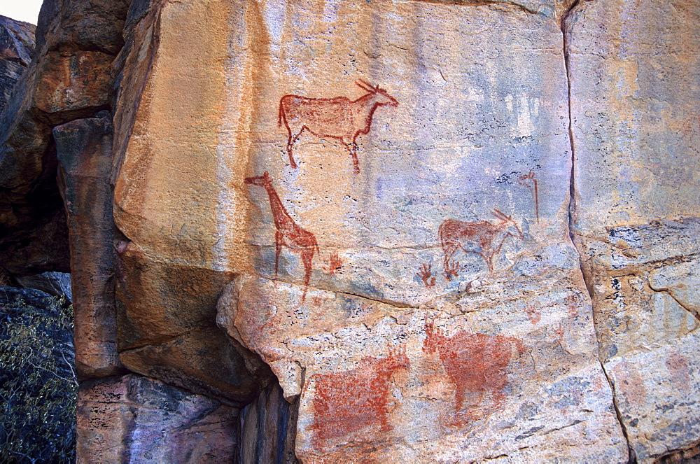 Rock art, Tsodilo Hills, UNESCO World Heritage Site, Ngamiland, Botswana, Africa - 770-1790