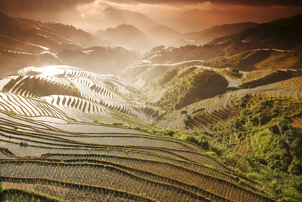 June sunrise, Longsheng terraced ricefields, Guangxi Province, China, Asia