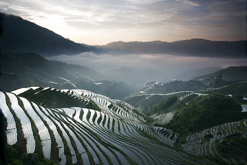 Sunrise in June, Longsheng terraced ricefields, Guangxi Province, China, Asia