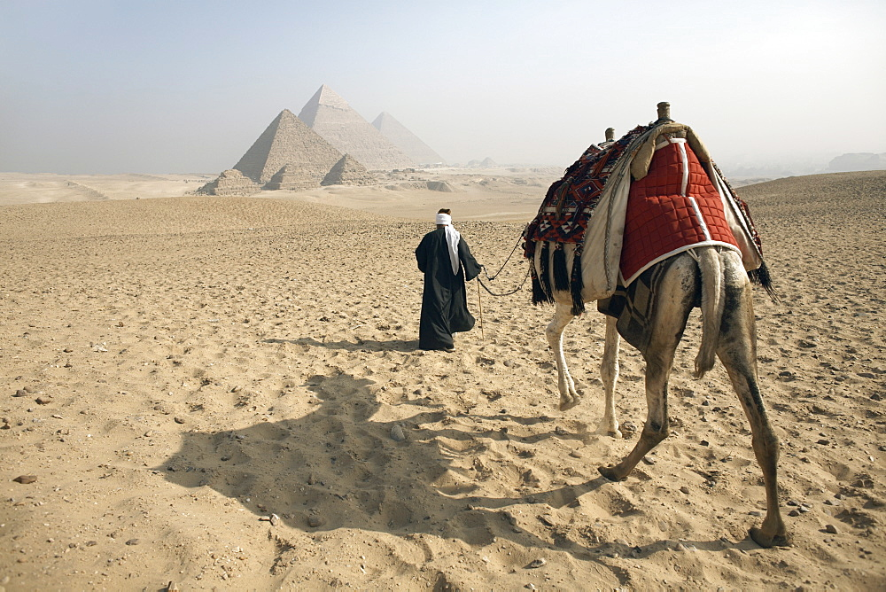 A Bedouin guide and camel approaching the Pyramids of Giza, UNESCO World Heritage Site, Cairo, Egypt,North Africa, Africa