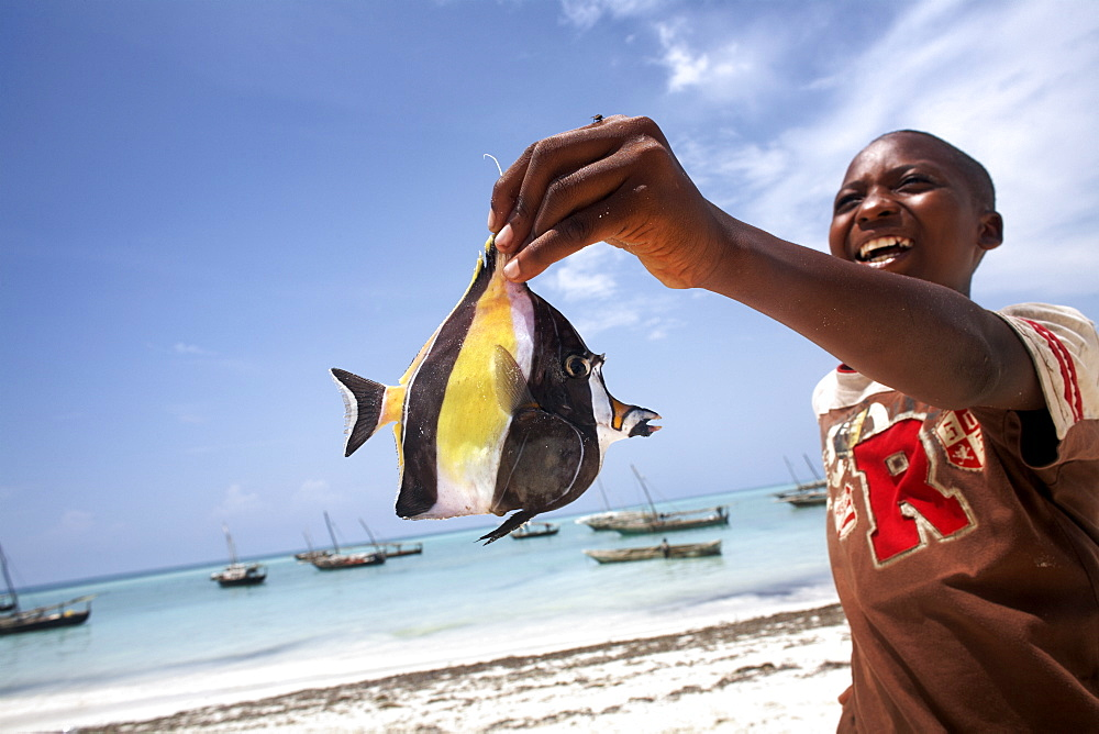 A tropical fish on Nungwi beach, Zanzibar, Tanzania, East Africa, Africa - 774-741