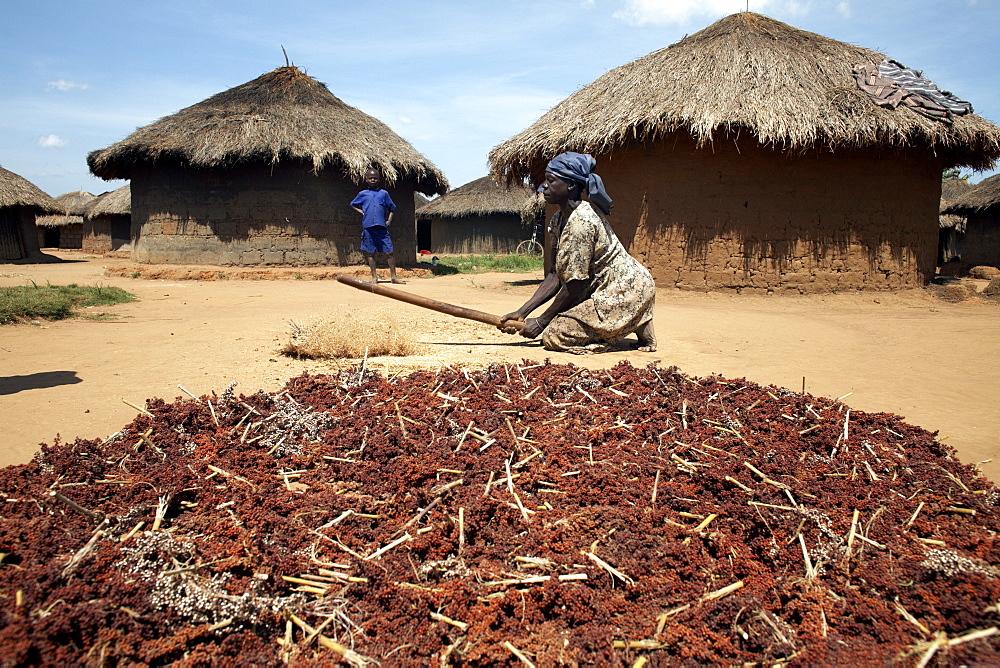 A woman pounds grain, Gulu, Uganda, East Africa, Africa - 774-756