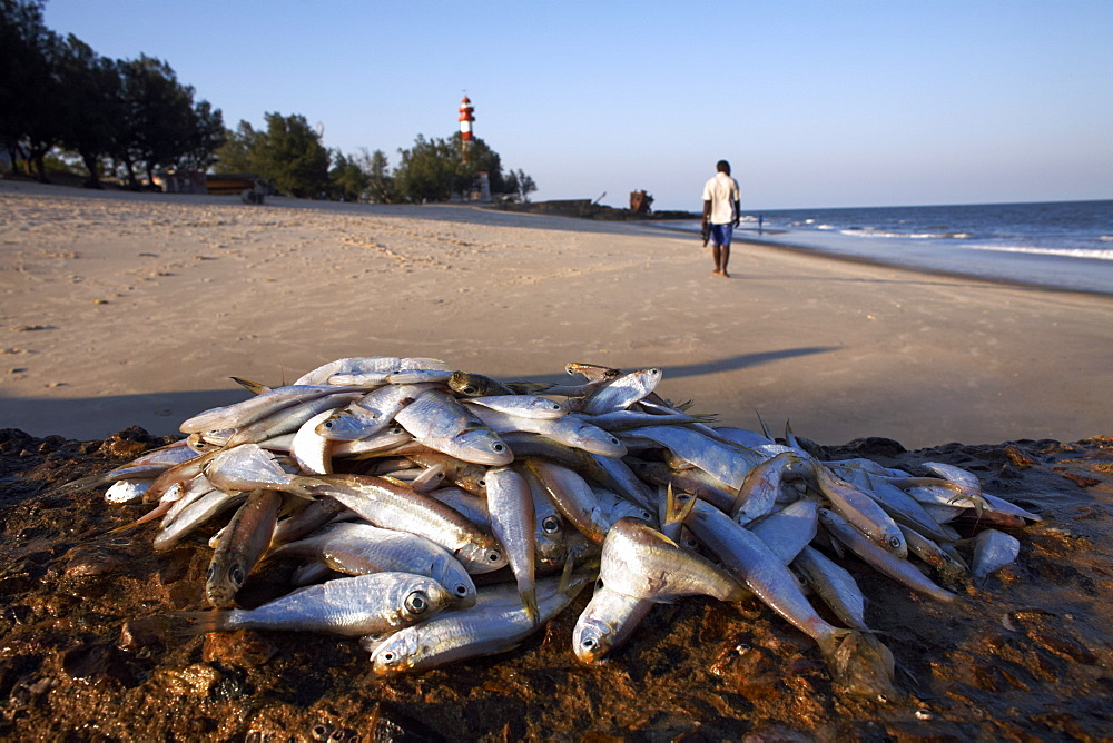 Fresh fish piled on the rocks at the coastal city Beira, Mozambique, Africa