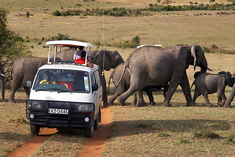 Tourists on safari watch a herd of elephants in the Masai Mara National Reserve, Kenya, East Africa, Africa