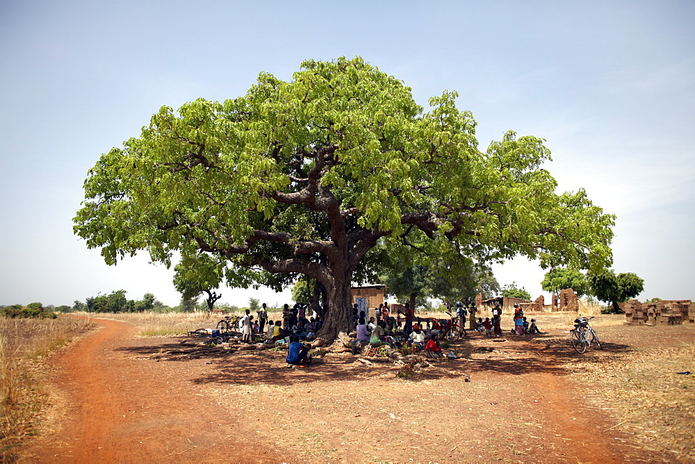 Villagers gather under a large tree in Nandom, Ghana, West Africa, Africa
