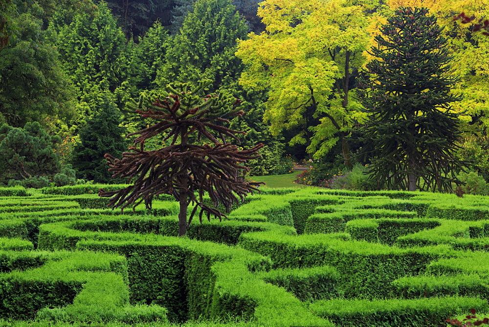 Maze, VanDusen Gardens, Vancouver, British Columbia, Canada, North America