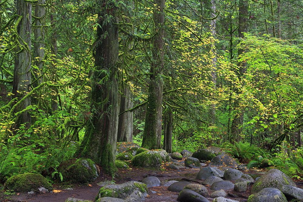 Lynn Canyon Park, Vancouver, British Columbia, Canada, North America
