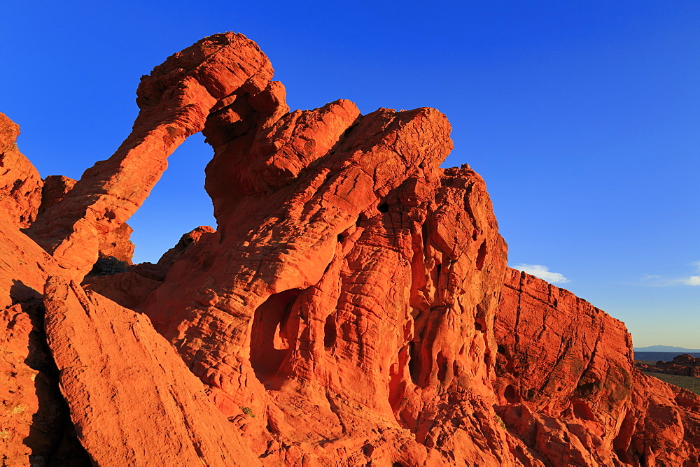 Elephant Rock, Valley of Fire State Park, Overton, Nevada, USA