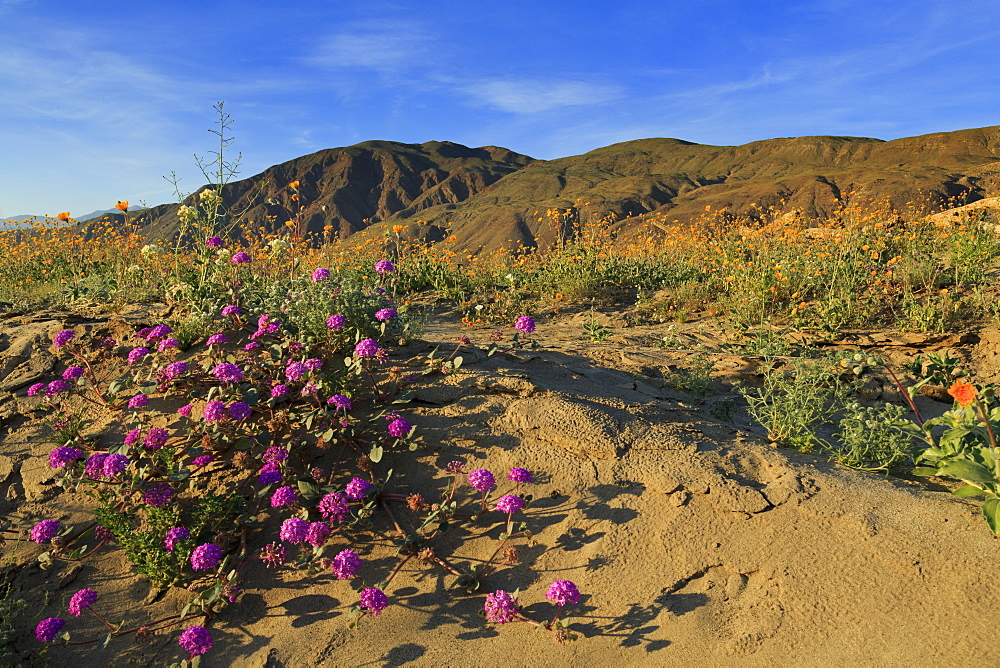 Anza-Borrego Desert State Park, Borrego Springs, California, United States of America, North America
