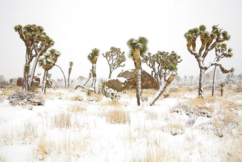 High Quality Stock Photos Of Joshua Tree National Park