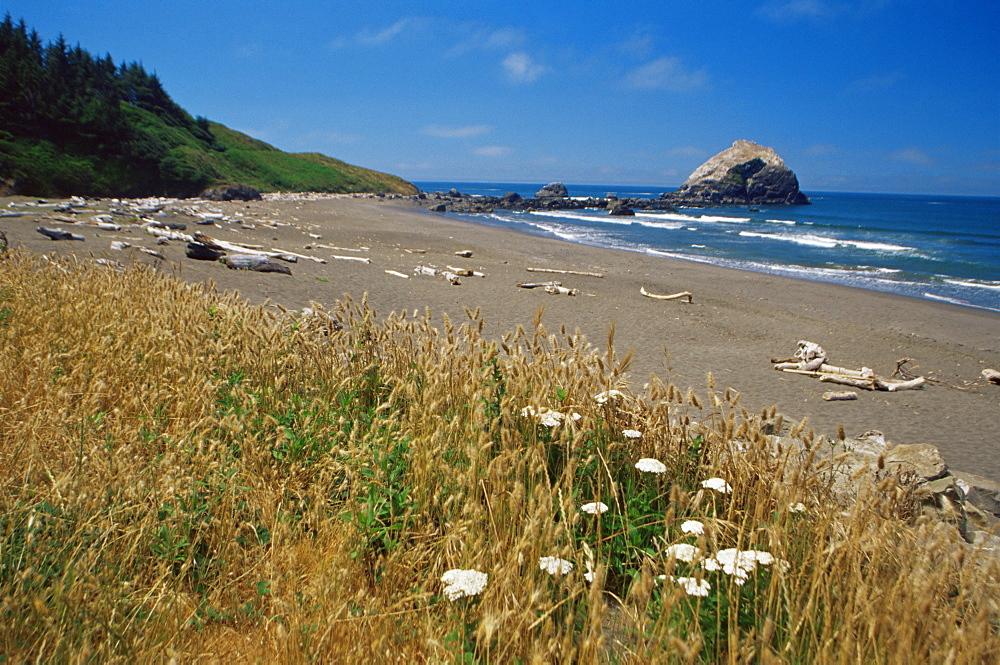 Del Norte coast, Redwoods State Park beach, northern California, United States of America, North America