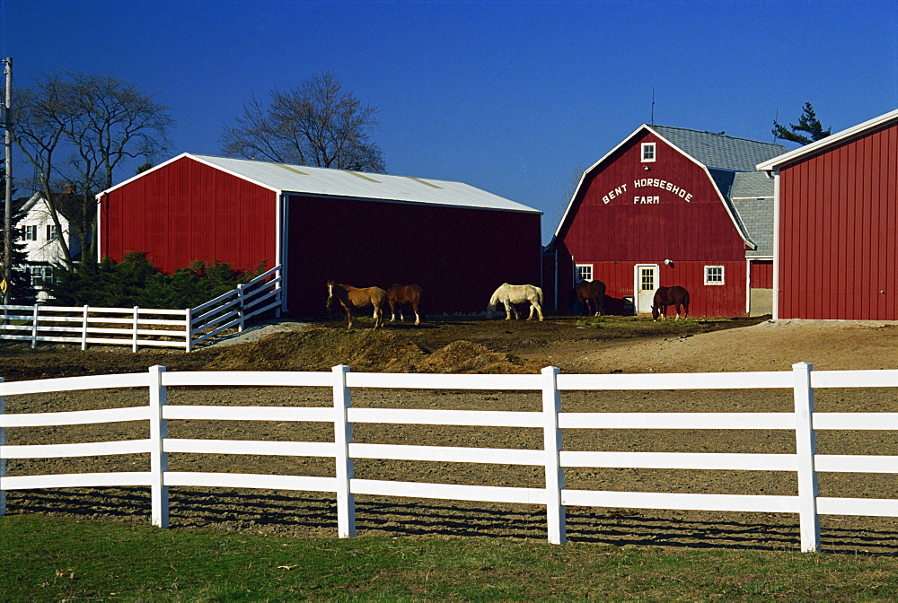 Horse farm, Racine, Greater Milwaukee area, Wisconsin, United States of America, North America