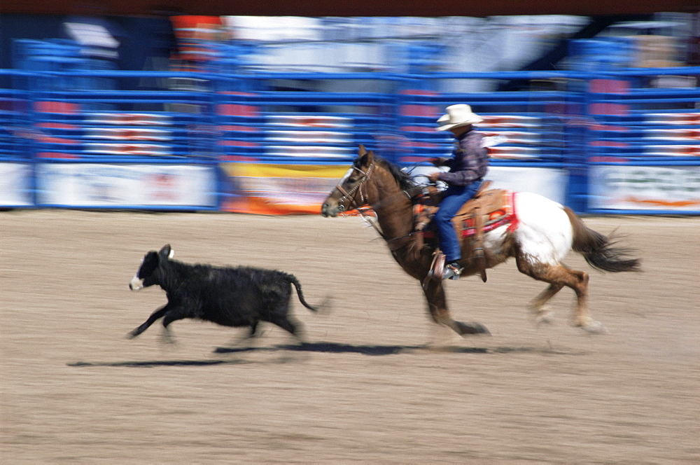 Fiesta de los Vaqueros, Tucson Rodeo, Tucson, Arizona, United States of America, North America