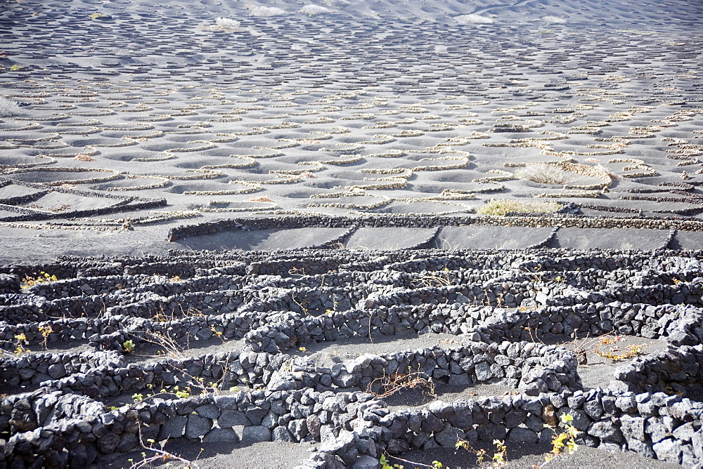 Terraced Vineyard, Lanzarote, Canary Islands, Spain, Atlantic, Europe - 783-119
