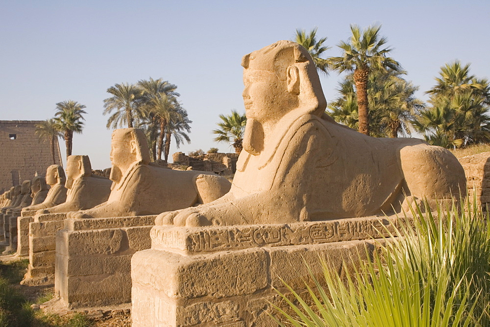 Avenue of Sphinxes, Luxor Temple, Luxor, Thebes, UNESCO World Heritage Site, Egypt, North Africa, Africa - 783-17