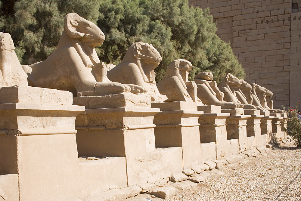 Avenue of Rams leading to temple precinct, Karnak, near Luxor, Thebes, UNESCO World Heritage Site, Egypt, North Africa, Africa