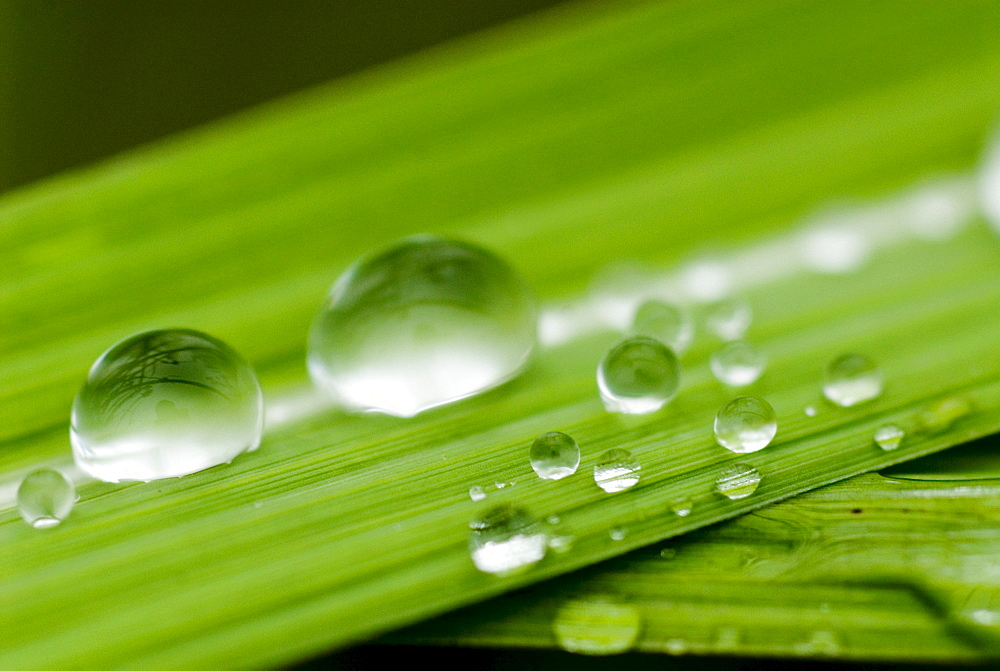 Water droplets on grass, Dali, Yunnan, China, Asia - 784-13