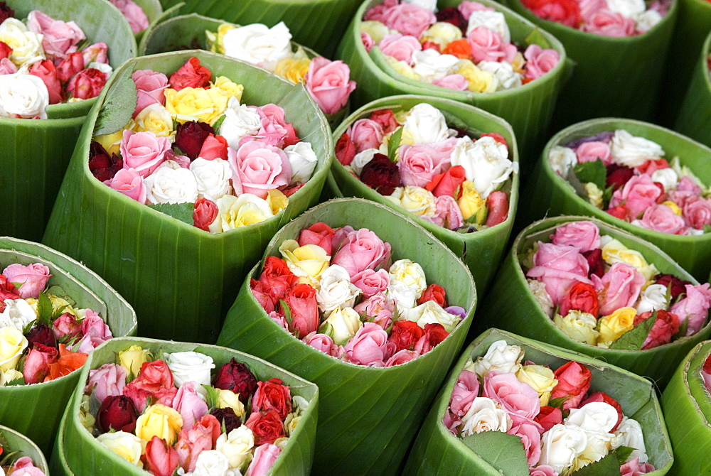 Roses for sale, Chatuchak weekend market, Bangkok, Thailand, Southeast Asia, Asia - 784-232