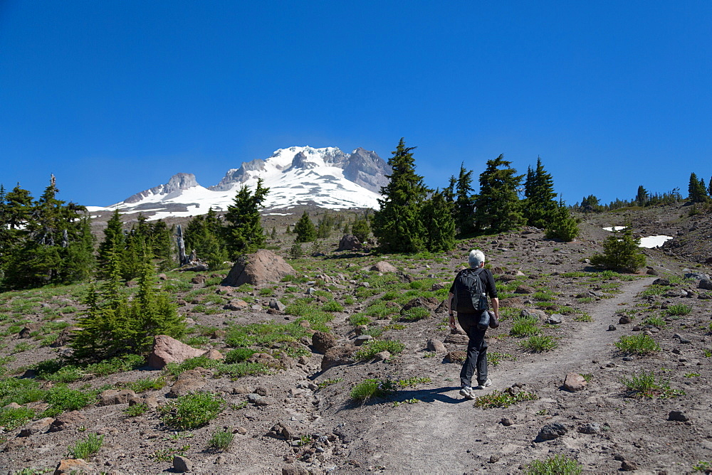 Lady hiker walking on a trail on Mount Hood, part of the Cascade Range, Pacific Northwest region, Oregon, United States of America, North America