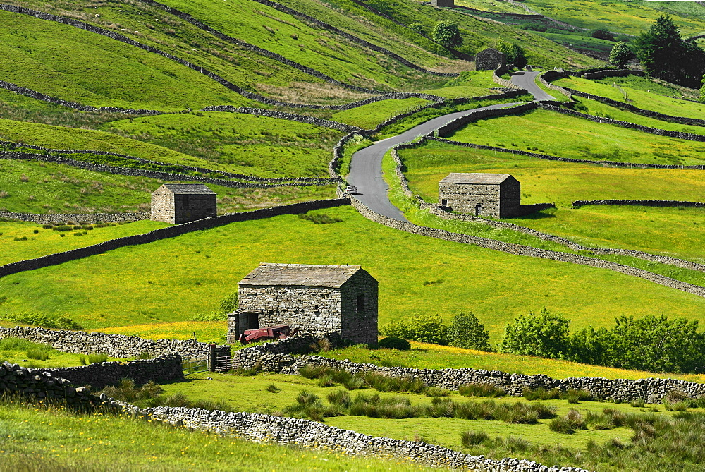 Meadows with field barns, Swaledale, Yorkshire Dales National Park, North Yorkshire, England, United Kingdom, Europe - 792-878