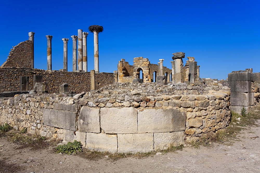 The Capitol, Roman ruins, Volubilis, UNESCO World Heritage Site, Morocco, North Africa, Africa