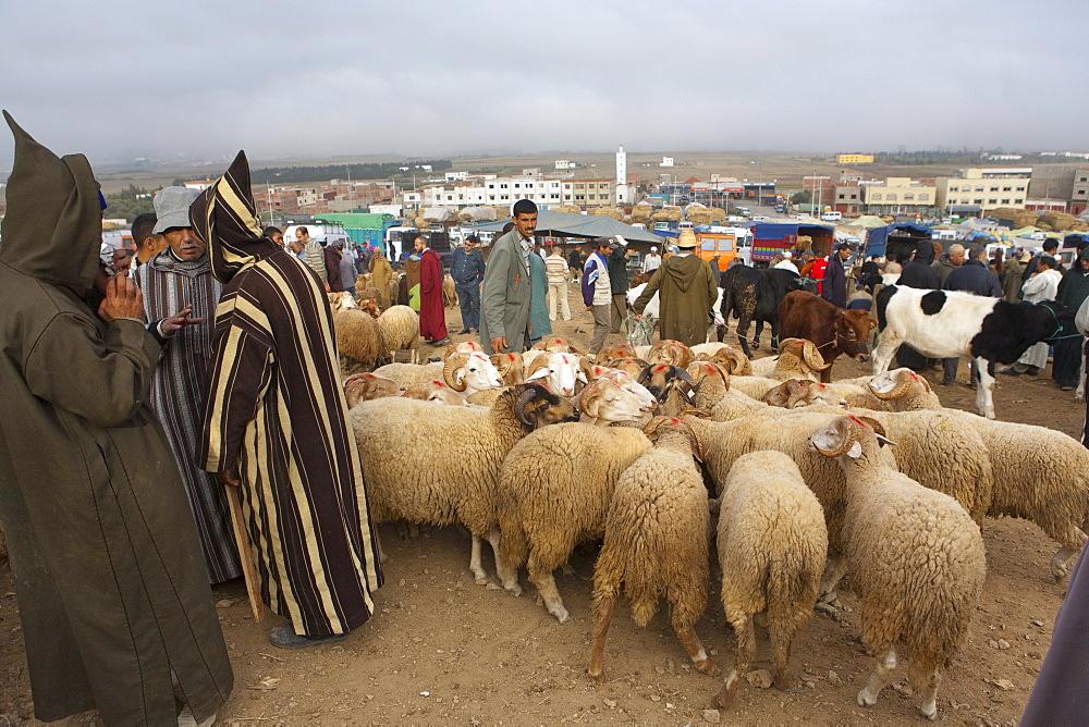 Animal market, near Tetouan, Morocco, North Africa, Africa - 793-1062