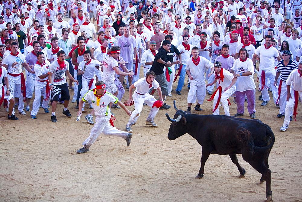 Vaquilla (little cow), Encierro in the Plaza de Toros, San Fermin Fiesta, Pamplona, Navarra, Spain, Europe - 793-1144
