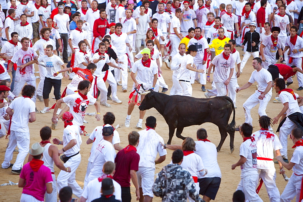 Vaquilla (little cow), Encierro in the Plaza de Toros, San Fermin Fiesta, Pamplona, Navarra, Spain, Europe - 793-1151